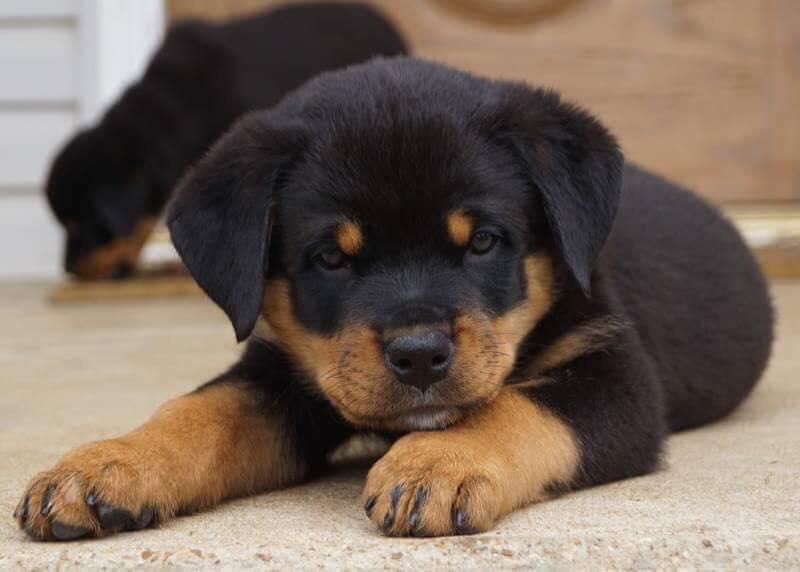 thoe scar puppy